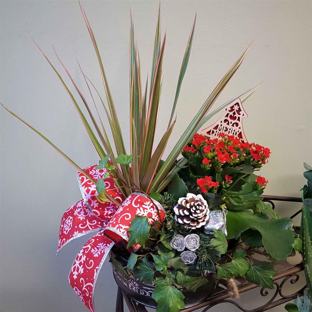 Indoor Xmas Planter